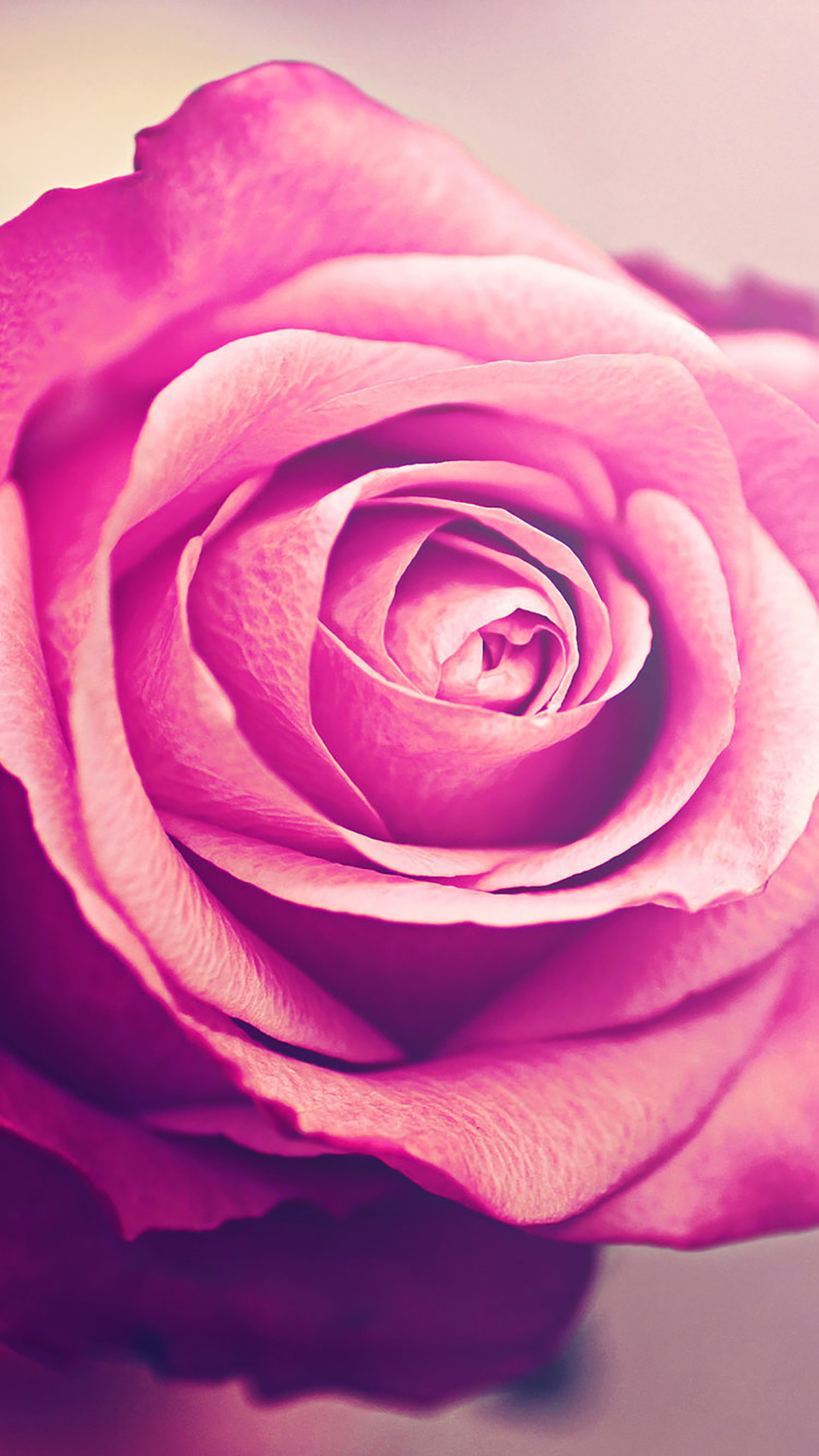 Rose Wallpaper Iphone Pink Rose Wallpaper Iphone Flower Novocom Top