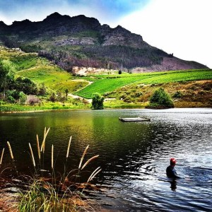 Open water swimming Stellenbosch, Thelema, December 7