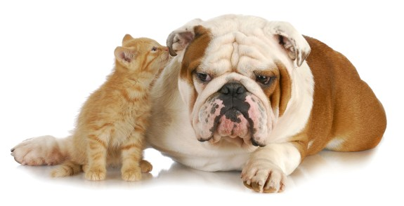 Image result for dogs and cats love natural treats