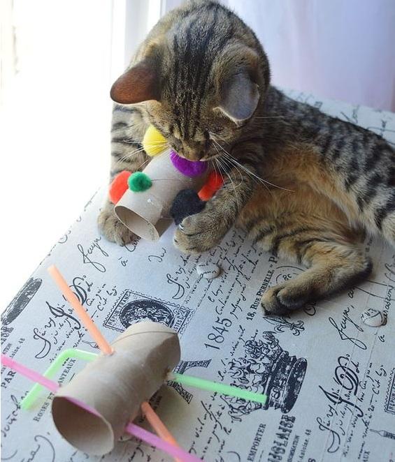 Как сделать кошке приятно – как делать массаж коту?
