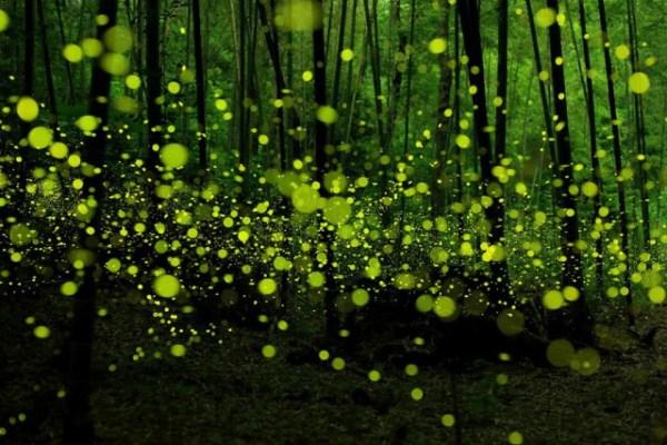 Мистические леса которые вам захочется