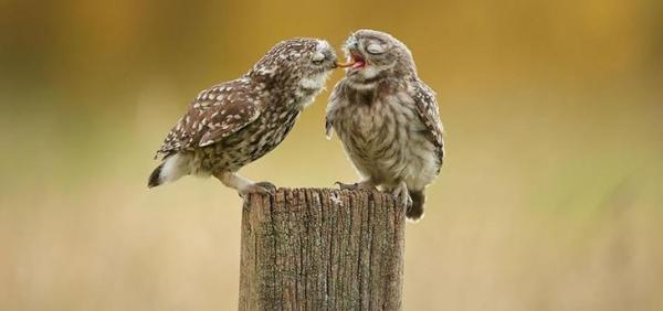 NewPix.ru - Красивые фотографии сов   Картинки с совой ...