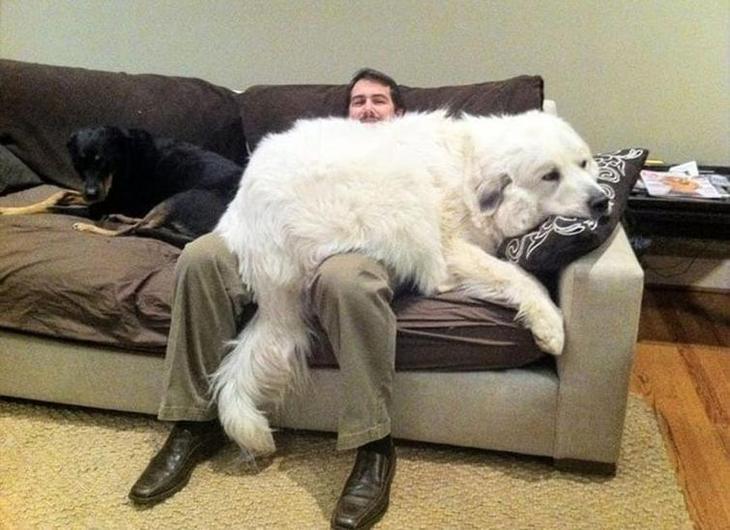 20 смешных фотографий собак, которые сделают даже самый хмурый день светлей