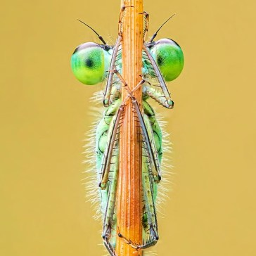 Gallery: International Garden Photographer of the Year Macro Art 15 Competition Winners