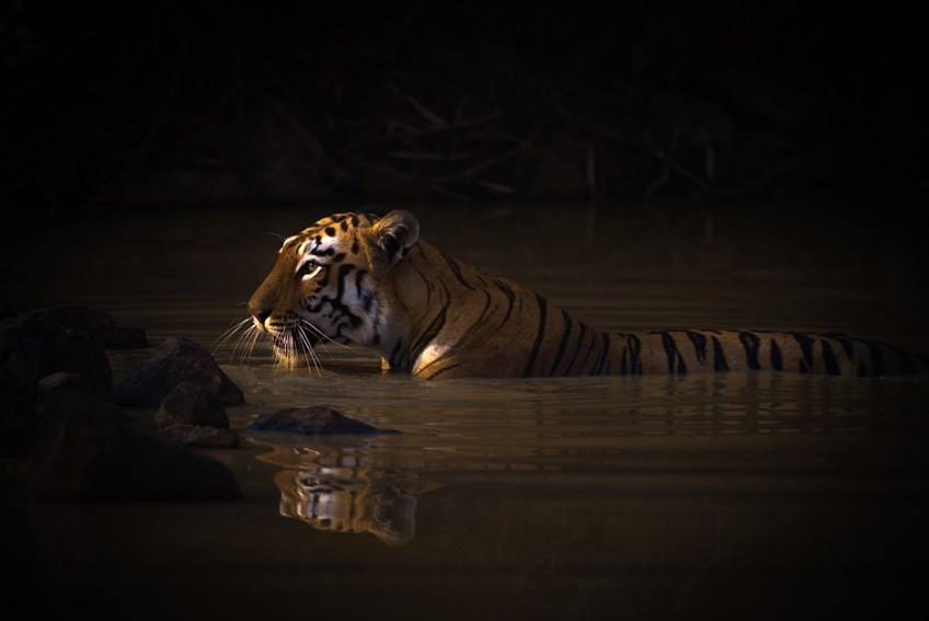 Slideshow: Winners of the 2020 World Nature Photography Awards