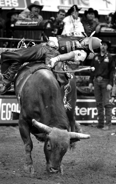 professional bull riding   Tumblr