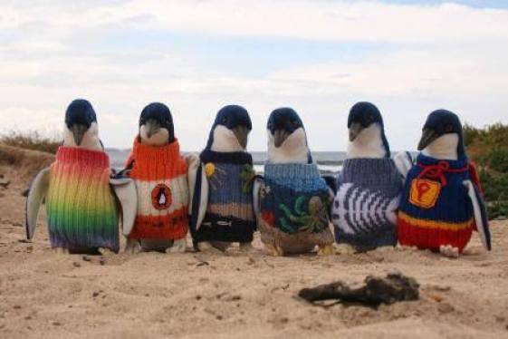 Des pingouins avec des Pulls