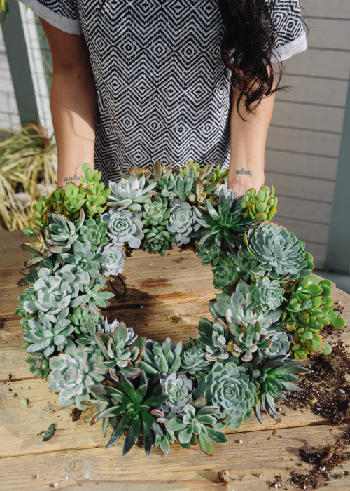 DIY Succulent Wreath featuring Willow & Jade's Veronica on Uncovet