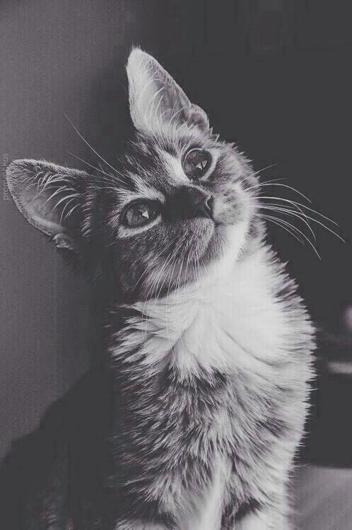 black and white hipster | Tumblr