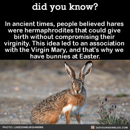 In ancient times, people believed hares were hermaphrodites that could give birth without compromising their virginity. This idea led to an association with the Virgin Mary, and that's why we have bunnies at Easter. Source
