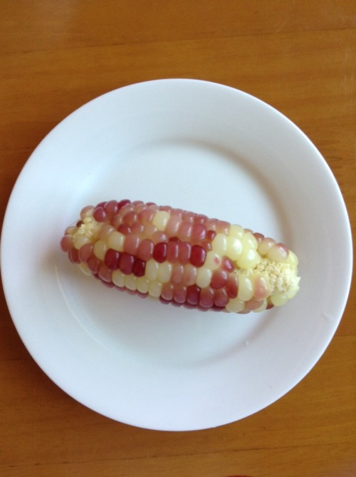 glutinous corn home grown