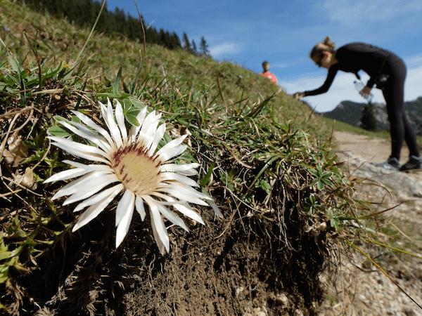 mangia minga // Hiking Heimgarten: Vom Walchensee nach Ohlstadt
