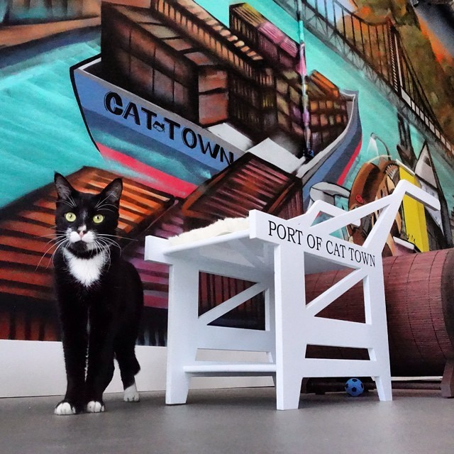 America's first permanent cat cafe is now open at 2869 Broadway in Oakland, CA! We're also expanding our Cat Zone, learn about that and help us fund the build out by donating at Saving Pets Challenge Fundraiser!The Cat Town Cafe is split into two rooms, the Cafe and the Cat Zone.<br /> The Cat Zone is where:<br /> We have between 6 - 20 free roaming cats who areavailable for adoption.Meaning, they are coming out of tiny cages of the shelter, and waiting to find a permanent home while here in our Cat Zone.<br /> We allow 14 people to enterevery hour on the hour, this is to help limit the stress and over stimulation of our four legged friends.<br /> Walk-ins are welcome, but wehighly recommendthat you make aCat Zone Reservationfor a $10 donation to Cat Town,especially on weekends!This willensure your visiting time is availableand support a great cause.<br /> You arewelcome to bring cafe food andbeverageinto the Cat Zone, but please don't bring your own cat!<br /> Volunteers will be on hand toanswer any questionsyou have about cats, adoptions, and cat related things.</p> <p>Please note:</p> <p>Catssleepa lot. They alsohidea lot. This is natural and healthy. Our cats meet up to140 peoplea day, 5 days a week. If you're itching for play time, werecommend coming early for the 10AM and 11AM hours, when the cats are most active.<br /> We are anon-profit rescuededicated to the safety and well-being of our cats. Their comfort and safety is ourfirst priority.<br /> Our cafe isminimal, but awesome. We serve extremely good pour over coffee from Bicycle Coffee, bagels from Authentic Bagel Company, and various treats from Rolling Sloane's.Plus, we have thefriendliestemployees you'll ever meet!We have limited indoor and outdoor seating, and viewing windows into the Cat Zone should we reach capacity.<br /> We areclosedMonday&Tuesdayto acclimate new cats into the space and give our current residents some much deserved rest.<br /> Cat Townis a non-profit cat rescue, that started in 201