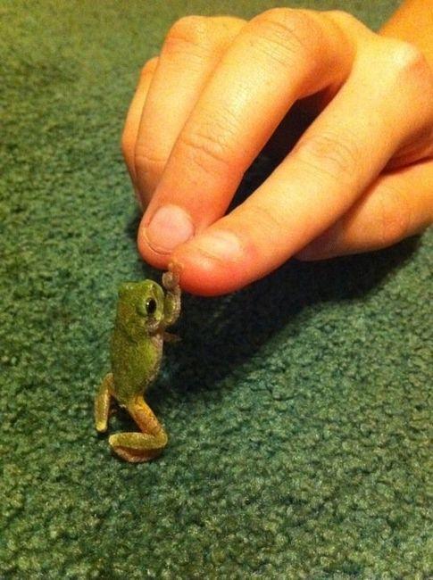 prettygirlfromvirginia:</p><br /> <p>High-five little dude!<br /><br />