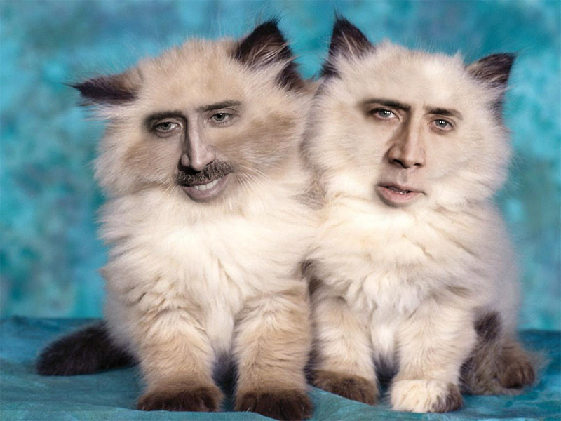 Nicolas-cage-cats • 14n: Twin Terrors