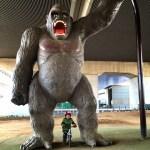 ゴリラ公園ランバイク開放日
