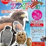 流山生涯学習センター猛禽類フライトショー