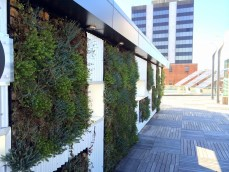 Rooftop green space