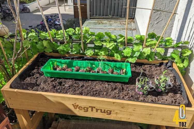 Aushärten des Saatguts