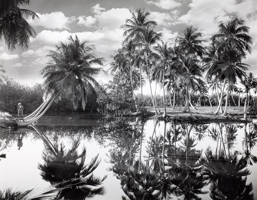 Coconut palms along the Mayagüez lagoons in Puerto Rico, 1924.Photograph by Charles Martin, National Geographic Creative