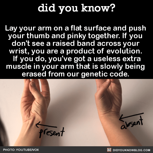 Lay your arm on a flat surface and push your thumb and pinky together. If you don't see a raised band across your wrist, you are a product of evolution. If you do, you've got a useless extra muscle in your arm that is slowly being erased from our genetic code. Source