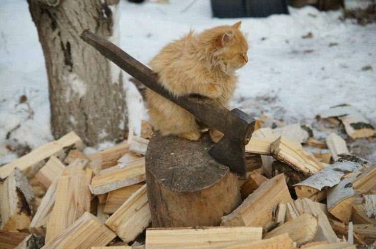 WTF : quand chat couper du bois, hiver sera rude