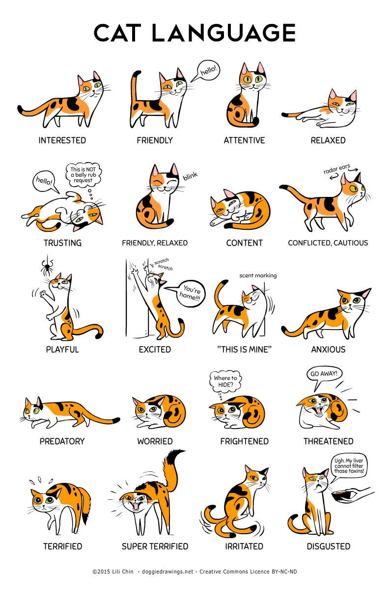 NEW: Cat Language!A big thank you to the Training and Behavior Dept of Oregon Humane Society for their help with cat body language information. I have been a cat-less dog person for many many years, so some of this stuff was new to me!For example, I didn't know that cats also emoted with their WHISKERS (relaxed = fanned out and horizontal; anxious = pulled backwards) Pupils, ear positions, body weight, and tails are the other indicators of how a cat is feeling. *As with dog body language, we look at the whole body and context *. And yes, cats feel and express DISGUST. I didn't make this up. :)I will be selling 11″ x 17″ and 11″ x 14″ Cat Language prints at CatConLA this weekend, along with other cat-related stuff! I hope to see you there! Booth #333.If you cannot attend CatConLA, a print-resolution version of Cat Language will soon be available as a FREE DOWNLOAD from my website atwww.doggiedrawings.net/freeposters [Please feel free to share, download, print, distribute! As per the Creative Commons License terms on my website: please don't crop, modify, or use these images commercially.]Donations are always welcome and appreciated. :)- Lili x