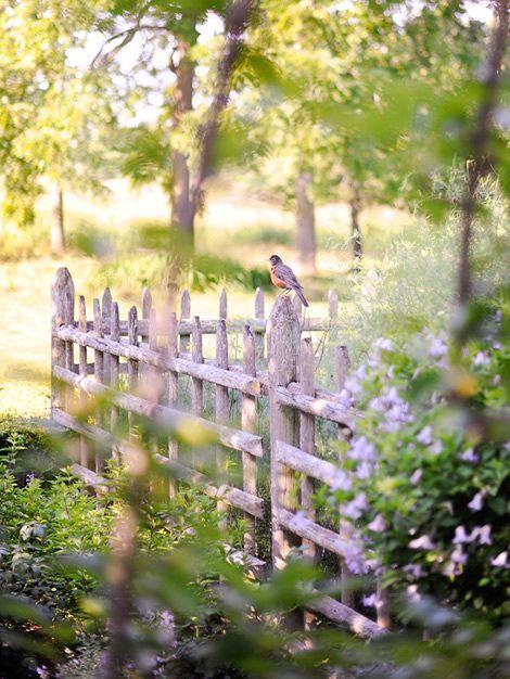 amandaricks.com/summers-for-the-birds/