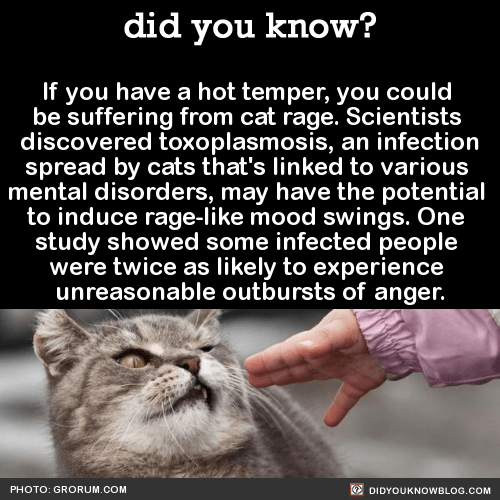 If you have a hot temper, you could  be suffering from cat rage. Scientists  discovered toxoplasmosis, an infection spread by cats that's linked to various  mental disorders, may have the potential  to induce rage-like mood swings. One  study showed some infected people  were twice as likely to experience  unreasonable outbursts of anger.  Source