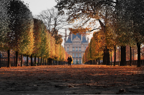 <br /> Jardins des Tuileries, Paris  | via proteos<br />