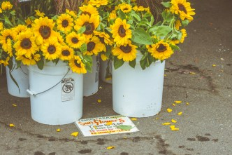 inexpensive sunflowers