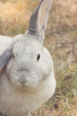 bunny modeling