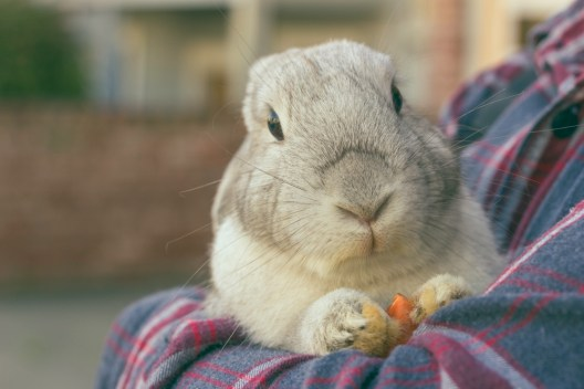 bunny holding a carrot