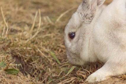 bunny digging
