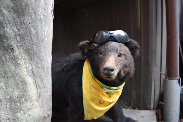 小熊の剥製が置いておりました
