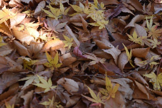 雲取山を登っているときに置いていた落ち葉