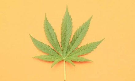 420-The Origin Of The Iconic Stoner Phrase.