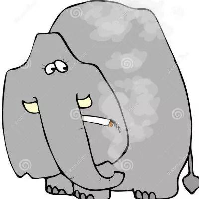 Elephant Marijauna Strain Review