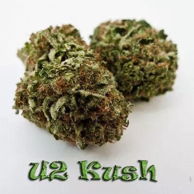 U2 Kush Marijuana Strain Review - Bono's Best Bud | 420 Reviews