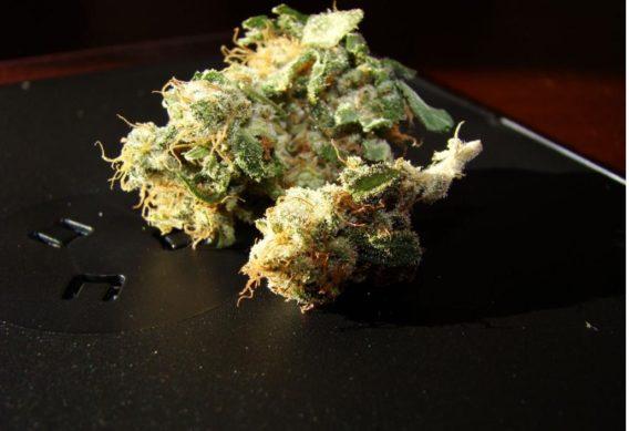 Buy 98 Aloha White Widow online-weed shop online worldwide