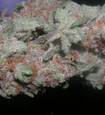 Buy Northern Lights online-northern lights for sale-420 mail order worldwide