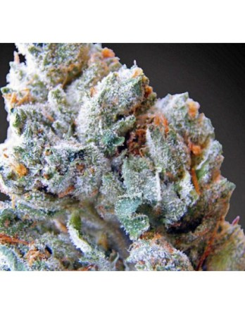 Buy Blueberry Kush online-blackberry kush for sale-order weeds without card online-medical cannabis maryland