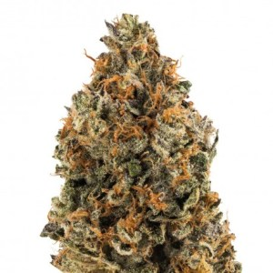 22% Off OG Kush Auto seeds High Supplies discount