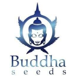 Buddha Seeds Seed City Discount Code