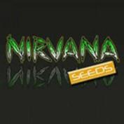 Nirvana Seedbank Seedsman Promo