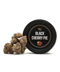 Buy black cherry pie, buy black cherry pie Strain, Buy black cherry pie Strain by West Coast Cure, Buy black cherry pie Strain West Coast Cure, Buy black cherry pie West Coast Cure, buy West Coast Cure black cherry pie, buy west coast cure black cherry pie online, buy west coast cure online, black cherry pie for Sale, black cherry pie Strain for Sale, black cherry pie West Coast Cure for Sale, Order black cherry pie Strain, Order black cherry pie West Coast Cure, order west coast cure black cherry pie, PURCHASE black cherry pie WEST COAST CURE, Shop black cherry pie West Coast Cure, west coast cure, west coast cure for sale, west coast cure black cherry pie, west coast cure black cherry pie for sale, Where to Buy black cherry pie Strain, Where to Buy black cherry pie West Coast Cure