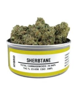 Buy sherbtane marijuana strain, Buy sherbtane online, Buy sherbtane strain Australia, buy sherbtane strain online, Buy sherbtane strain UK, order sherbtane strain Australia, order sherbtane strain online, order sherbtane strain UK, Purchase original sherbtane online, sherbtane, sherbtane for sale, sherbtane, sherbtane space monkey meds, sherbtane space monkey strain, sherbtane strain, sherbtane strain for sale, sherbtane strain for sale Australia, sherbtane strain for sale France, sherbtane strain for sale Germany, sherbtane strain for sale UK, sherbtane weed, space monkey sherbtane strain, where to buy sherbtane strain, space monkey meds, space monkey strain, space monkey, sherbtane space monkey strain, sherbtane space monkey meds