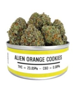 alien orange cookies, alien orange cookies for sale, alien orange cookies space monkey meds, alien orange cookies space monkey strain, alien orange cookies strain, alien orange cookies strain for sale, alien orange cookies strain for sale France, alien orange cookies strain for sale Germany, alien orange cookies strain for sale UK, alien orange cookies weed, Buy alien orange cookies marijuana strain, Buy alien orange cookies online, Buy alien orange cookies Space Monkey Meds Online, Buy alien orange cookies strain Australia, buy alien orange cookies strain online, Buy alien orange cookies strain UK, Get you best alien orange cookies strain online, order alien orange cookies strain Australia, Order alien orange cookies strain online, order alien orange cookies strain UK, Purchase original alien orange cookies online, space monkey, space monkey alien orange cookies strain, space monkey meds, space monkey strain, the alien orange cookies strain, Where to Buy alien orange cookies Space Monkey Meds, where to buy alien orange cookies strain