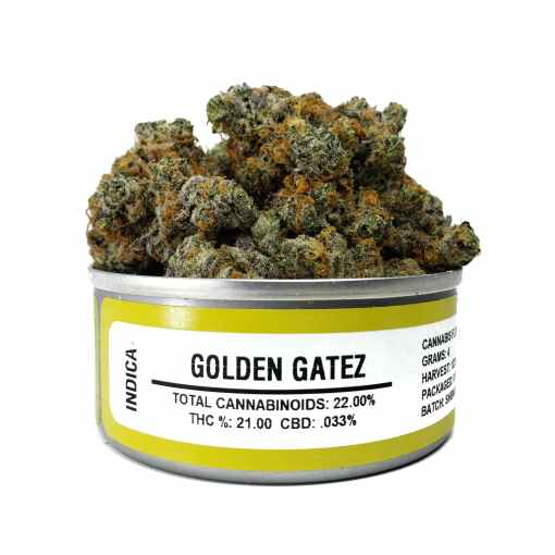golden gatez, golden gatez for sale, golden gatez space monkey meds, golden gatez space monkey strain, golden gatez strain, golden gatez strain for sale, golden gatez strain for sale France, golden gatez strain for sale Germany, golden gatez strain for sale UK, golden gatez weed, Buy golden gatez marijuana strain, Buy golden gatez online, Buy golden gatez Space Monkey Meds Online, Buy golden gatez strain Australia, Buy golden gatez strain UK, Get you best golden gatez strain online, order golden gatez strain Australia, Order golden gatez strain online, order golden gatez strain UK, Purchase original golden gatez online, space monkey, space monkey golden gatez strain, space monkey meds, space monkey strain, the golden gatez strain, Where to Buy golden gatez Space Monkey Meds, where to buy golden gatez strain