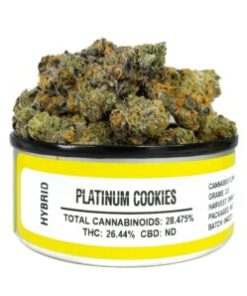 Buy platinum gsc marijuana strain, Buy platinum gsc online, Buy platinum gsc strain Australia, buy platinum gsc strain online, Buy platinum gsc strain UK, order platinum gsc strain Australia, order platinum gsc strain online, order platinum gsc strain UK, Purchase original platinum gsc online, platinum gsc , platinum gsc for sale, platinum gsc, platinum gsc space monkey meds, platinum gsc space monkey strain, platinum gsc strain, platinum gsc strain for sale, platinum gsc strain for sale Australia, platinum gsc strain for sale France, platinum gsc strain for sale Germany, platinum gsc strain for sale UK, platinum gsc weed, space monkey platinum gsc strain, where to buy platinum gsc strain